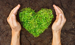 hands holding green heart shaped tree on crack earth
